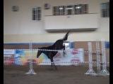 Восточный Принц, вор., 2010 (Пуэбло - Вахида от Хип-Хопа), чвл. К. Меряхин